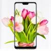 Мобильный телефон ASUS ZenFone Max Pro (M2) ZB631KL 6/64 GB Cosmic Titanium (ZB631KL-4J068EU)